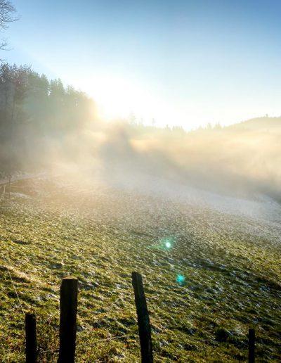 Natur Nebel
